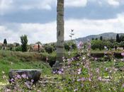 EPHESUS, TURKEY: Temple Artemis, Wonder Ancient World