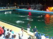 Croatian Water Polo