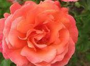 Oakland Rose Garden: Hidden