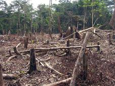 Reforesting Wealthy Countries Common Good