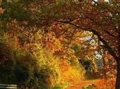 Cancer Rising Monthly Astrological Forecast October 2012