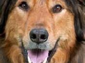 Doggie Brigade Canine Star Annie
