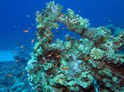 Caribbean Coral Reefs Danger