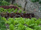 Wiveton Hall Kitchen Garden