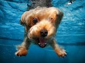 More Incredible Underwater Dogs Seth Casteel!