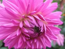 Gorgeous Blooms Garden House