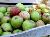 Appel Happel: Apple Picking Festival Mainz