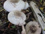 Wonderful Mushrooms