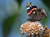 Beautiful Buckinghamshire Butterflies