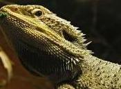 Featured Animal: Lizard