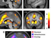 Where Brains Predict Romantic Attraction Glance.