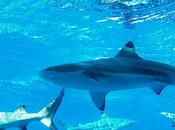 Cook Islands Largest Shark Sanctuary Declaration