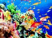 Bucket List Snorkel Great Barrier