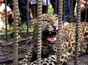 Leopard Tales Scaring Tourists Away from Athirappilly