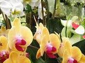 Orgy Orchids