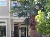 Story Palm Tree:)/ Grow Tree?