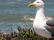 "Bodega Bay, Home Hitchcock Movie ""The Birds"""