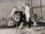 Lion Taming Part