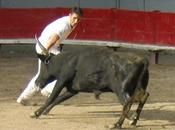 BULLFIGHTING SOUTHERN FRANCE: Course Comarge, Guest Post Gwen Dandridge