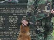 Military Working Dogs Today Have Long History Heroism