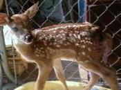 Indiana Couple Imprisoned Saving Deer