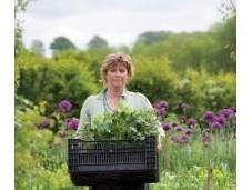 Sarah Raven Valley's Organic Garden
