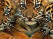 Wildlife Forensic Science Versus Poachers