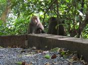 REALLY Dislike Monkeys (Guest Post)