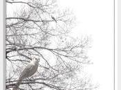 Sweet Dreams Dreamy Bird Photography Black White