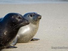 Needs SeaWorld?