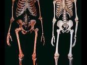 Neanderthals Extinct?