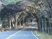 Famous Tree Tunnels