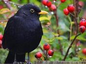 Garden Bird Project