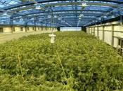 Feiglin Prepares Bill Easing Access Medical Marijuana