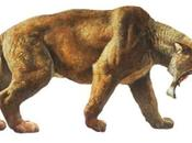 Sabertooth Tiger Fossil Found