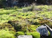 DAILY PHOTO: Mossy Green Spring