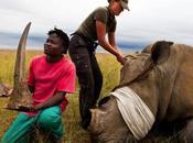 Rhino Wars Brent Stirton Photographer