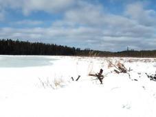 Snowshoeing Spruce Algonquin Provincial Park