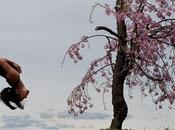 Yoga Refresh: Spring Stretching