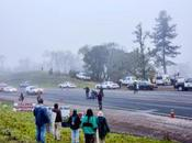 Tree Sitters Blocking Willits Bypass Route Pulled from Trees