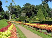 Amazing Garden Eden