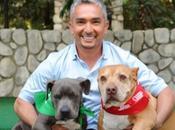 Cesar Millan... Your Dog's Bestfriend