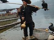 Dying Cormorant Fishing