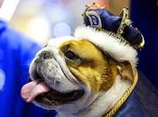Witness BULLDOGS Hold Court Beauty Pageant!