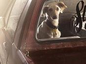 Dramatic Portraits Reveal Silence DOGS CARS!