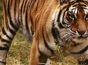 India Tiger Conservation Holiday
