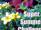 Super Summer Challenge