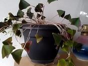 Jerk Plant