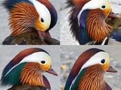 Most Beautiful (male) Chick Block