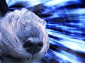 DOGS Travel Through Space Warp Speed!